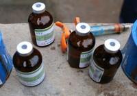 Quyết tâm chấm dứt việc sử dụng chất cấm trong chăn nuôi