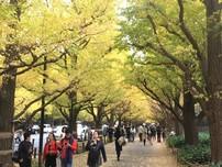 Chiêm ngưỡng rừng cây lá vàng, lá đỏ ở xứ Phù Tang