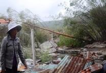 Hà Tĩnh đề nghị mua lại hàng chục ha gỗ bị gãy đổ