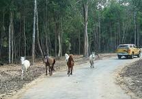 Safari vườn thú hấp dẫn nhất Việt Nam