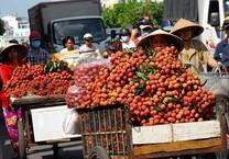 Xuất khẩu trái vải Việt Nam sang 30 nước