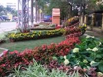Thanh Hóa bỏ 3 tỉ đồng làm đường hoa đón năm du lịch