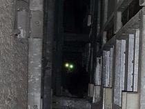 Chú mèo được giải thoát sau 5 năm mắc kẹt trong bức tường