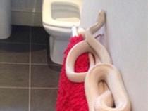 Kinh hoàng: Phát hiện rắn trắng dài gần 2m trong nhà tắm