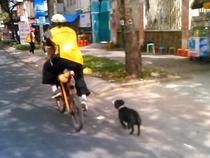 Ngộ nghĩnh người đi xe đạp gỗ, chó đeo kính