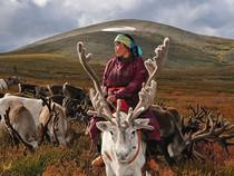 Ngày thường của tộc 'Người tuần lộc' ở Mông Cổ
