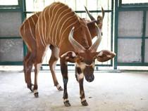 Vinpearl Safari bác thông tin 700 loài thú quý hiếm bị giết