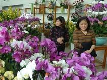 Chợ hoa tết: kỳ hoa, dị thảo được chú ý