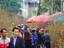 Chùm ảnh: Không khí Tết ngập tràn phố phường Hà Nội