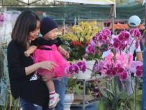 Muôn hoa khoe sắc ở chợ hoa TP Đà Nẵng