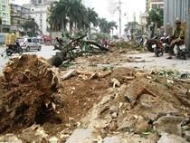 'Con đường đẹp nhất Việt Nam' tan hoang sau khi chặt cây xanh