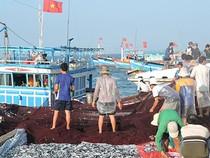Ngư dân Lý Sơn trúng đậm 'lộc biển' đầu năm