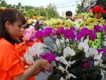 Hoa lan Việt 'hạ gục' hoa lan Thái Lan, Hàn Quốc