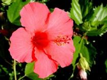 Bí quyết làm đẹp bằng hoa của Ấn Ðộ