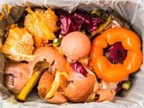7 thực phẩm dinh dưỡng cao thường bị vứt bỏ