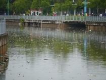 Sau mưa lớn, rác lại ngập kênh Nhiêu Lộc