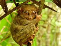 10 động vật sở hữu vẻ ngoài kỳ quặc 'không thể tin nổi'