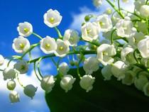 9 loài hoa mắc nhất thế giới