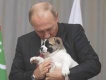 Ông Putin được tặng chó cưng nhân dịp sinh...