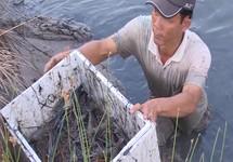 Phong trào nuôi tôm càng xanh lan đến Cà Mau