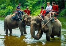 Chấm dứt du lịch cưỡi voi ở Yok Đôn