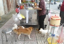 Ông Đoàn Ngọc Hải yêu cầu dẹp nạn chó thả rông ở quận 1