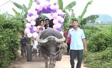 Độc đáo lễ rước dâu bằng xe trâu ở Nghệ An