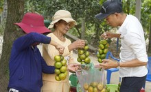 Độc đáo làng cây trái Nam bộ tại miền Trung