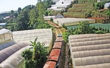 Tuyến xe lửa cổ đưa khách khám phá Đà Lạt