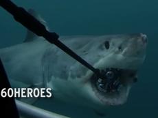 Bi hài cá mập nuốt trọn bộ quay phim có giá 12 ngàn đô