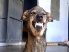 Lạ đời chú chó biết cười