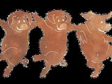 Nhân viên xe thịt lợn khiêu vũ với lợn