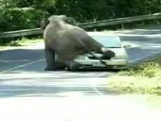 Clip voi chặn đường, đè bẹp ô tô khách tham quan