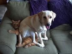 Buồn cười cảnh giành giật chỗ ngủ của chó mèo