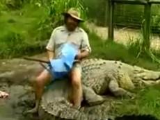 Vừa thót tim vừa buồn cười xem cá sấu ăn trưa