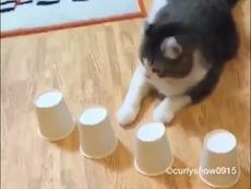 Khoái chí với chú mèo cực thông minh