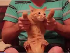 Biểu hiện buồn cười của mèo khi bị chủ cho nhảy disco