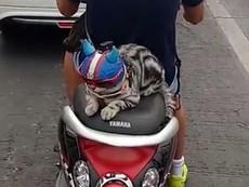 Chú mèo đội mũ bảo hiểm khi đi xe máy