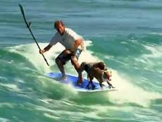2 chú chó lướt sóng điêu luyện cùng chủ