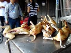 Clip: Chó xà mâu, chó trúng bả thành thịt ngon!