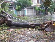 Cận cảnh bão số 12 đổ bộ vào Nha Trang