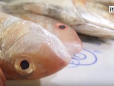 Cách đơn giản để nhận biết cá bị tẩm urê