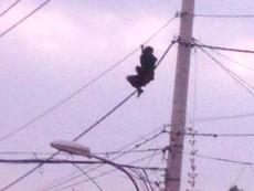 Clip: Thanh niên nghi ngáo đá, leo cột điện ở quận 12