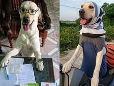 Dân mạng 'phát sốt' với chú chó hiểu được tiếng người