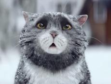 Clip: Đêm Giáng sinh của cô mèo phá hoại
