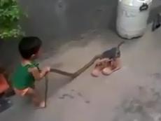 Rùng mình xem em bé tay không bắt rắn to