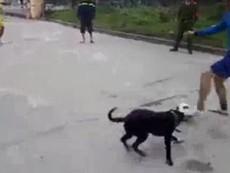 Buồn cười cảnh chú chó thích chơi bóng