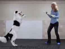 Chú chó nhảy cùng người đẹp vô cùng điêu luyện