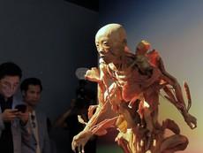 Khám phá 'Sự bí ẩn đặc biệt của cơ thể người'