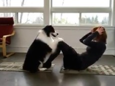 Chó tập Yoga cùng cô chủ mỗi sáng